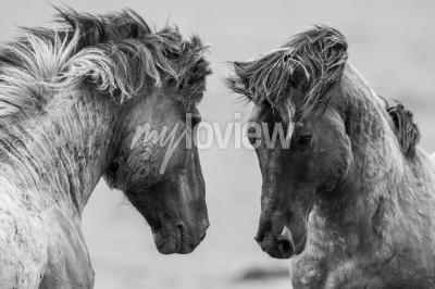 Papiers peints Deux, chevaux, jouer, jouer, ensemble