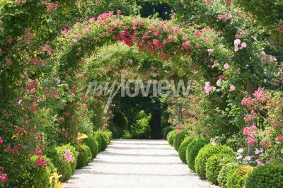 Papiers peints Rose Arch dans le jardin