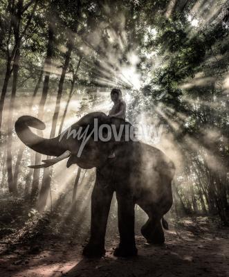 Image Mahout à la province de Surin Thaïlande éléphant