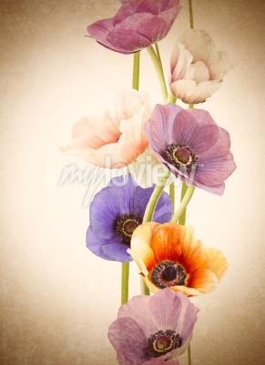Papiers peints Fleurs de pavot colorées fraîches