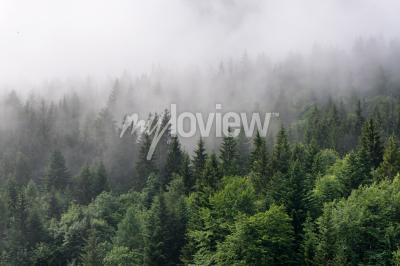 Papiers peints Forêt Evergreen Vue d'ensemble