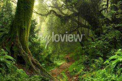Papiers peints Pluie de forêt tropicale
