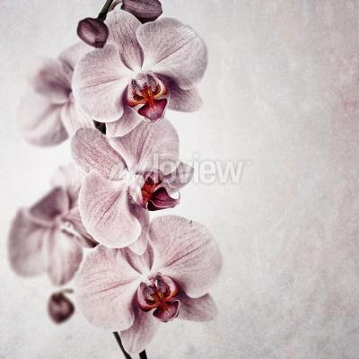 Papiers peints Une orchidée rose délicate sur fond de style vintage délavé