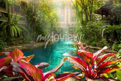 Papiers peints Style de piscine Jungle sous les arbres et le fond de la maison au moment du soleil