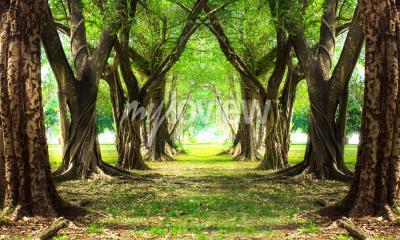 Papiers peints Forêt magique verte