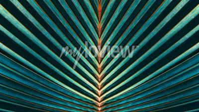 Papiers peints Rayé de feuille de palmier
