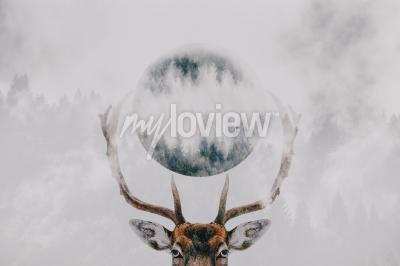 Double exposure of an antler and forest