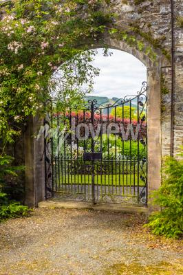 Papiers peints Beautiful old garden gate covered with green ivy