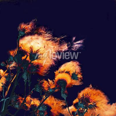 Image Silhouettes of bright fuzzy dry flowers and flying seeds on dark background