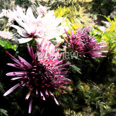 Papiers peints Stylized bouquet of chrysanthemums on grunge striped and stained background