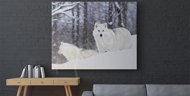 Image animaux loup arctique