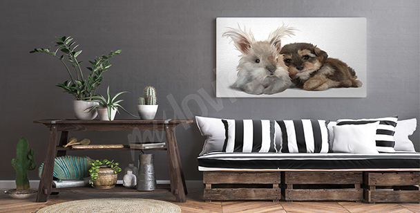 Image aquarelle animaux