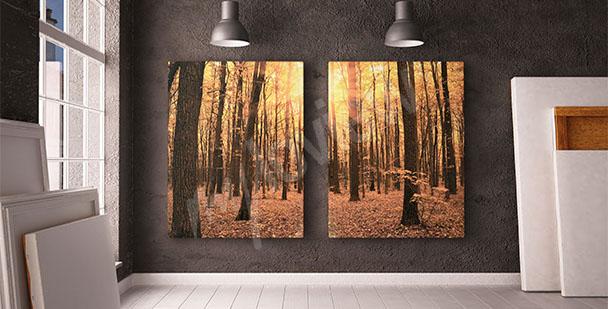 Image arbre et forêt