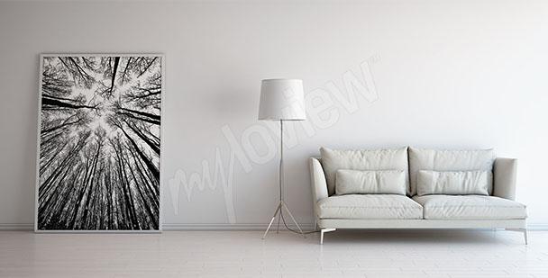Image arbre noir et blanc
