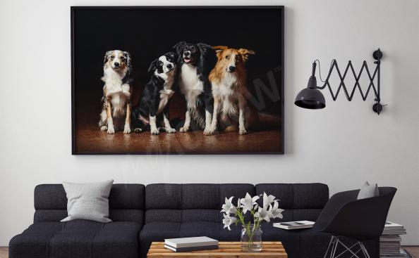 Image avec des chiens pour salon