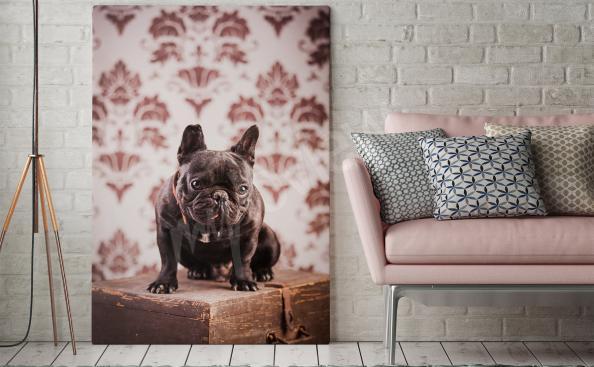 Image avec un chien dans le style vintage