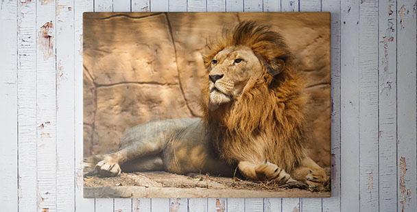 Image avec un lion pour salon