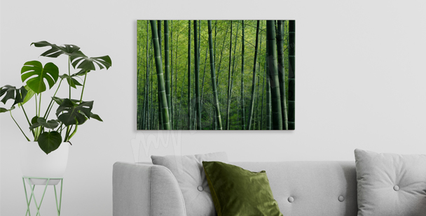 Image bambous dans la forêt