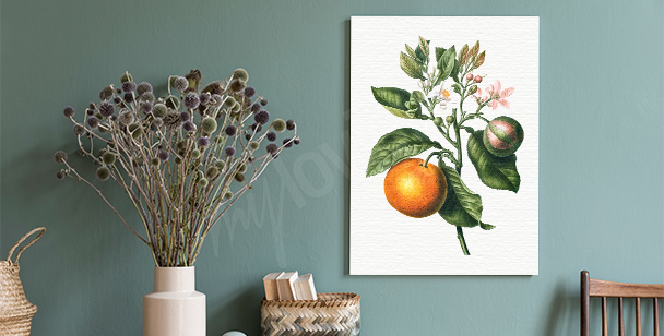 Image branche et agrume