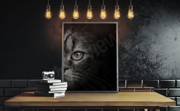 Image chat noir et blanc