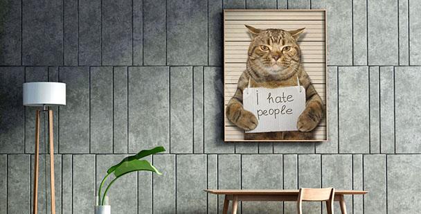 Image chat pour ado
