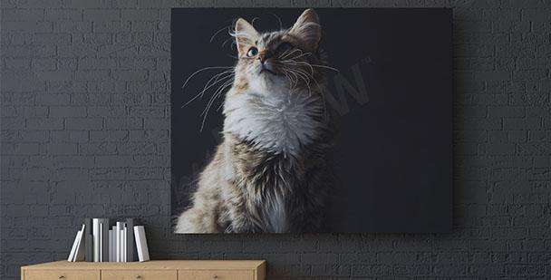 Image chat sur fond noir