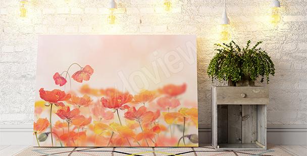 Image coquelicots en fleurs