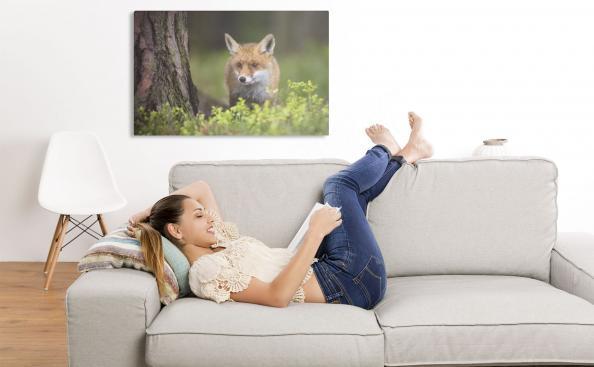 Image d'un petit renard dans le salon