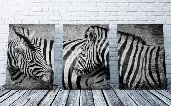 Image de l'Afrique et des zèbres