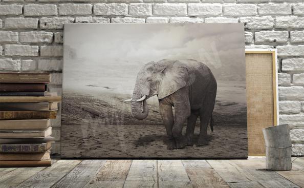 Image éléphant pour salon
