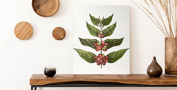 Image feuilles de caféier