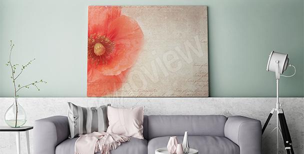 Image fleur de coquelicot