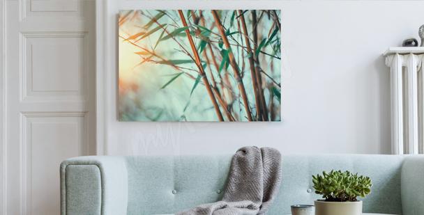 Image forêt de bambou