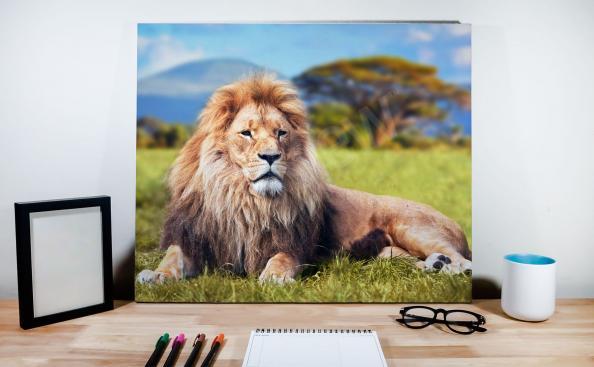 Image lion mâle sur fond de paysage