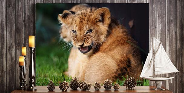 Image lionceau