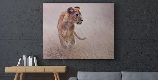 Image lionne dans l'herbe