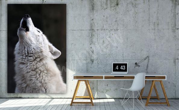 Image loup blanc