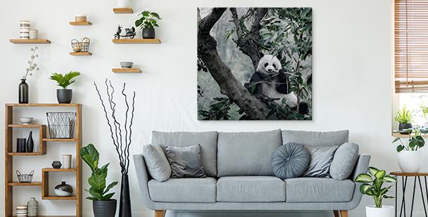 Image panda et arbres
