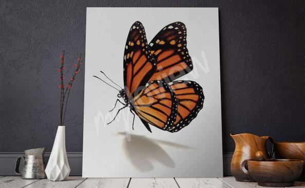 Image papillon pour salon