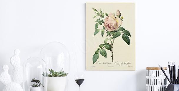 Image roses sur fond blanc