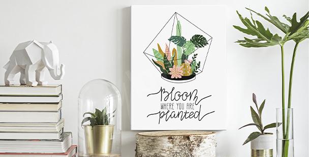 Image succulentes