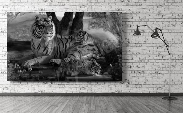 Image tigre noir et blanc