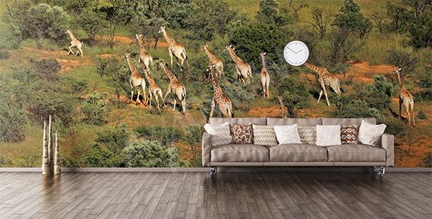Papier peint animaux africains