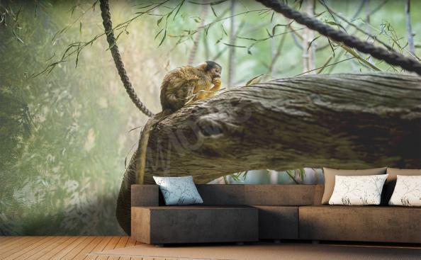 Papier peint animaux le singe