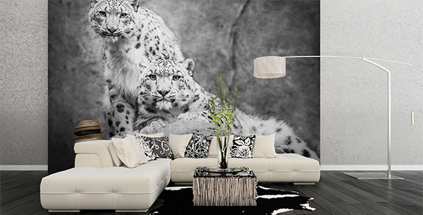 papiers peints cat gories animaux papier peint. Black Bedroom Furniture Sets. Home Design Ideas