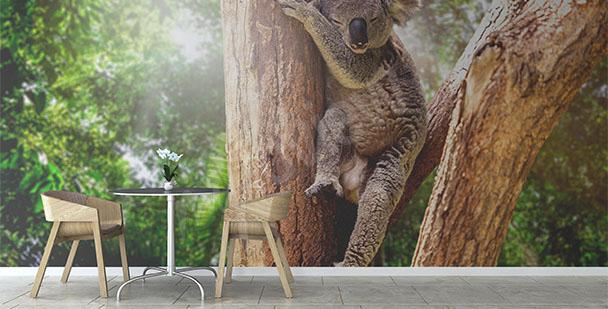 Papier peint Australie koala