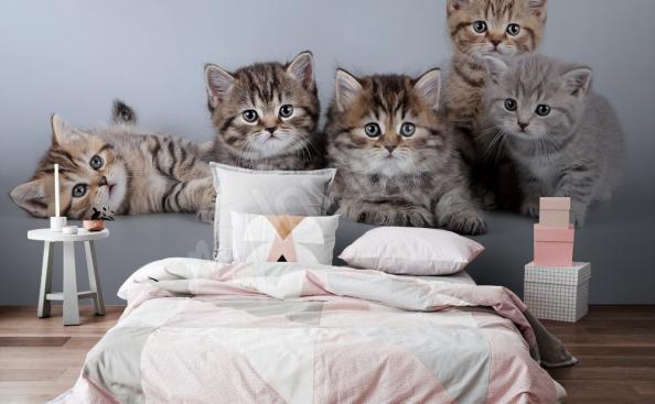 papier peint avec les petits chats