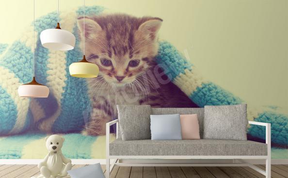 papier peint chaton sous une couverture