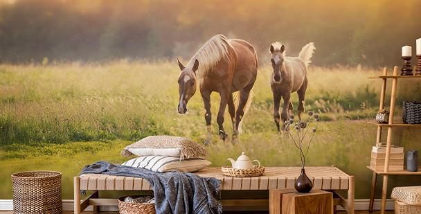 Papier peint chevaux au coucher du soleil