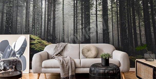 Papier peint forêt dans la brume